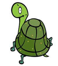 survivor turtle 101