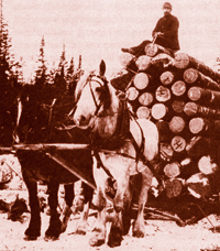 photo of sleigh of logs