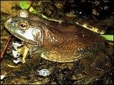 PIC OF FROG