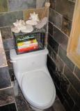 pic of toilet