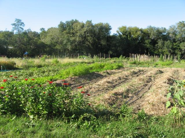NFI field growing