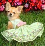 PIC OF DOG IN GARDEN PARTY ATTIRE