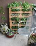 PIC OF PALLET WALL GARDEN