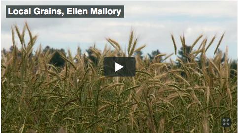 Ellen Mallory on New England Grains
