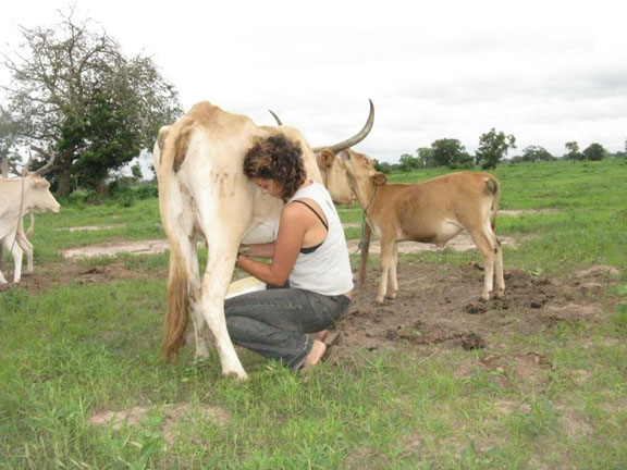 Marisa milking a cow in The Gambia, West Africa.