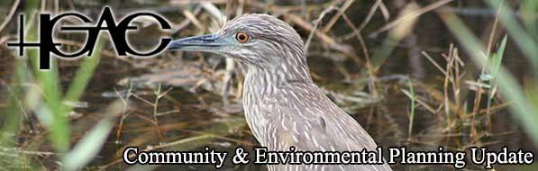 January 2016 Banner - Juvenile Yellow-crowned Night Heron