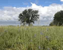 2015 PNA Winner Willow Waterhole Public Access Plan