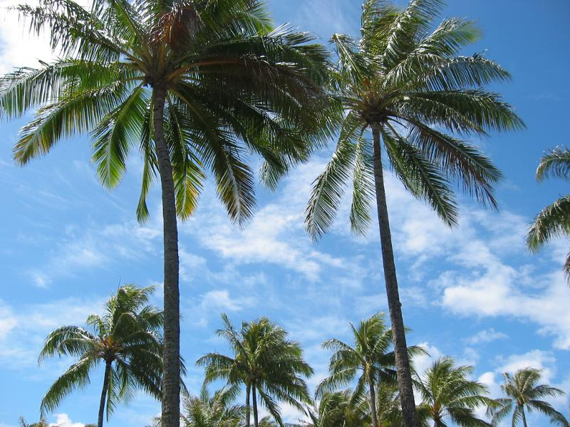 Nothing gives a landscape the  tropical  feel quite like palm trees. There are a number of palm varieties that thrive in the southern California climate. & Rocky Taylor Landscaping Spring Newsletter
