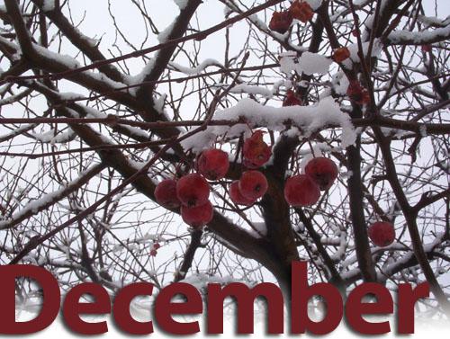 December image2