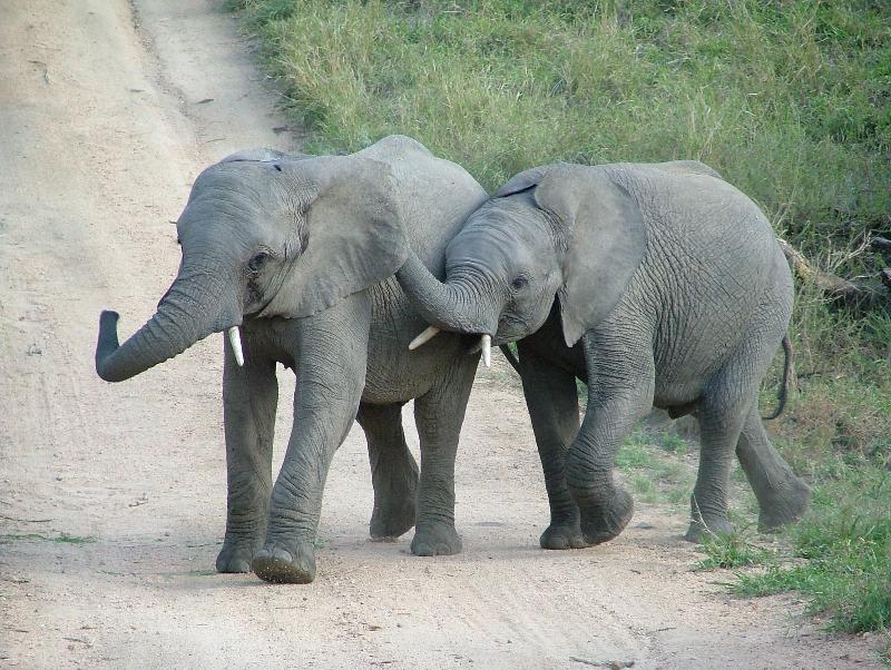 Mala Eli Twins