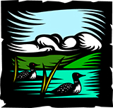 drawing of loons on a pond