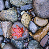 photo of autumn leaf on beach rocks