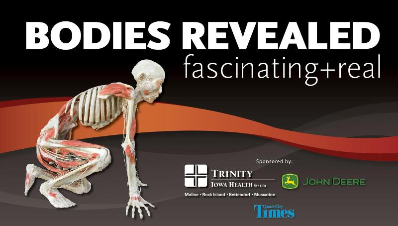 Bodies Revealed now on exhibit!