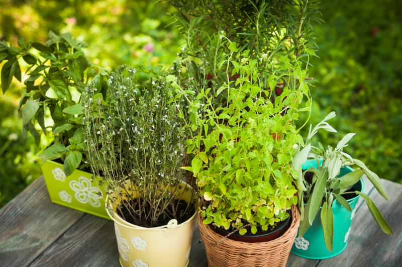 Cozy home garden with herbs - rosemary sage basil thyme and oregano