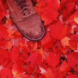 red-foliage-shoe.jpg