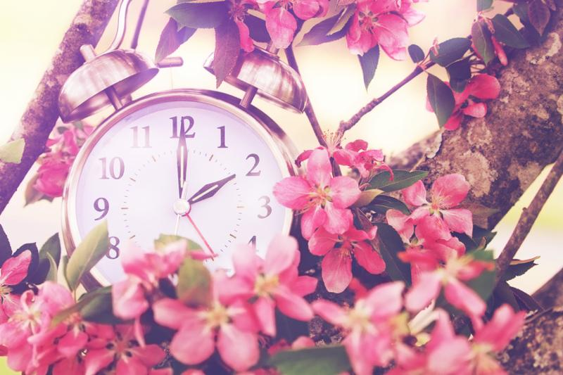 Set your clocks back in spring with this whimsical image of a clock surrounded by spring flowers set to 2 o clock  Extreme shallow depth of field with selective focus on clock.