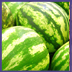 watermelons 7-12-10