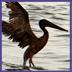 gulf spill environment UMNS 7-12-10