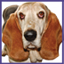call dog 11-6-09
