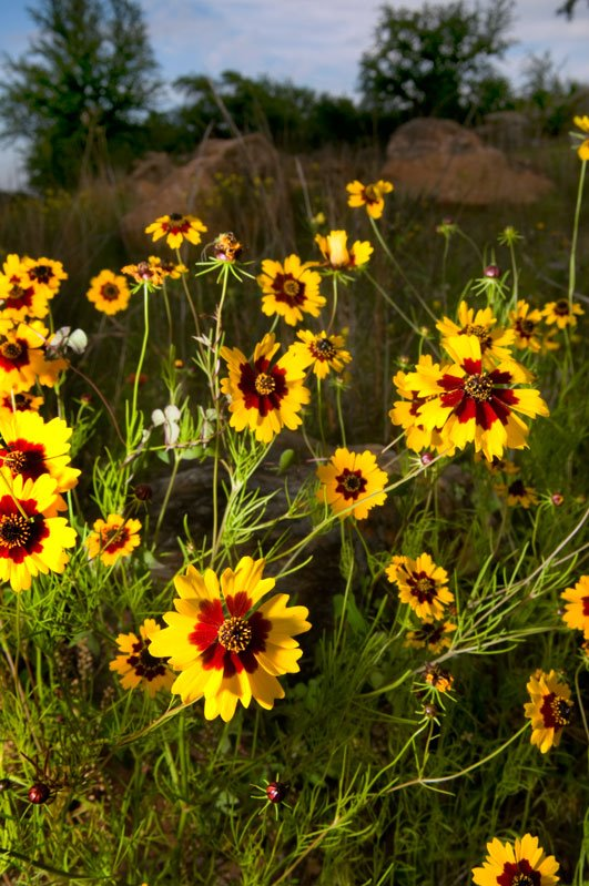 Cibolo Nature Center Plant Pictures