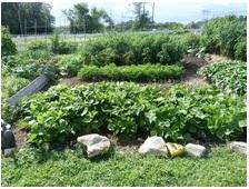 social action community garden