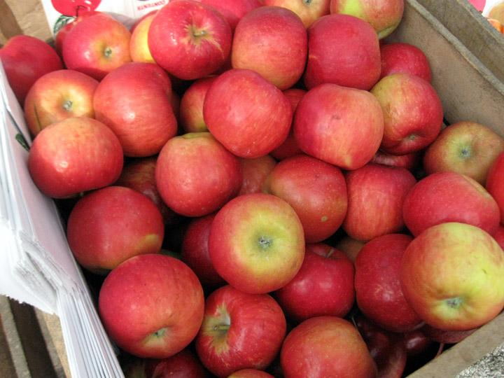 bin of apples
