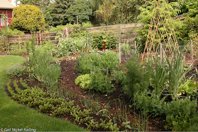 Spring garden with greens and leeks