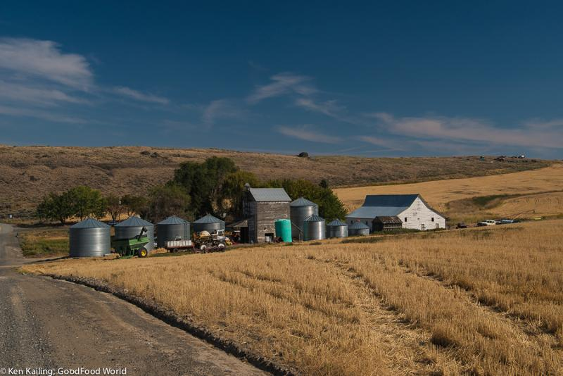Eastern Washington Grain Farm