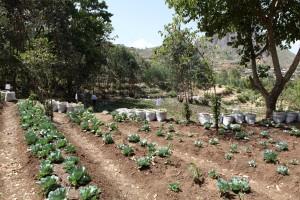 Ethiopian Garden
