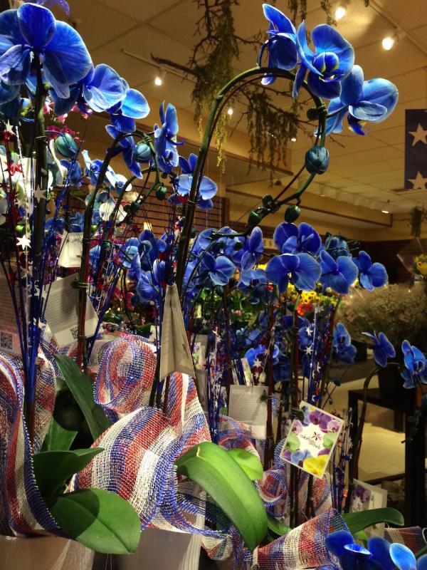 Weird blue orchids