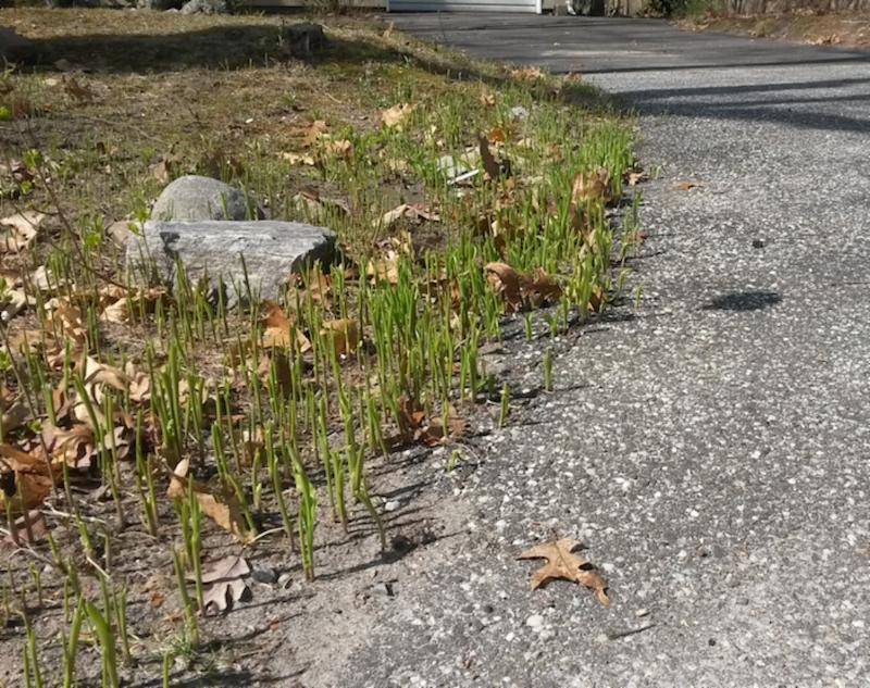 Flowers push through concrete