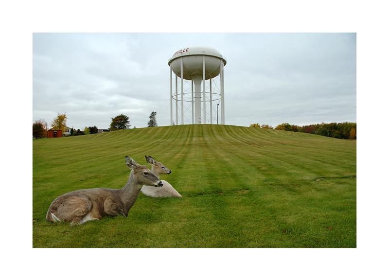 Deer _ water tower