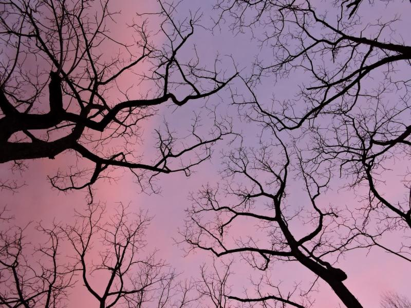 Pink _ purple sky with trees