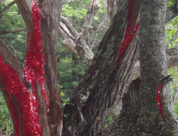 Rossi bleeding tree