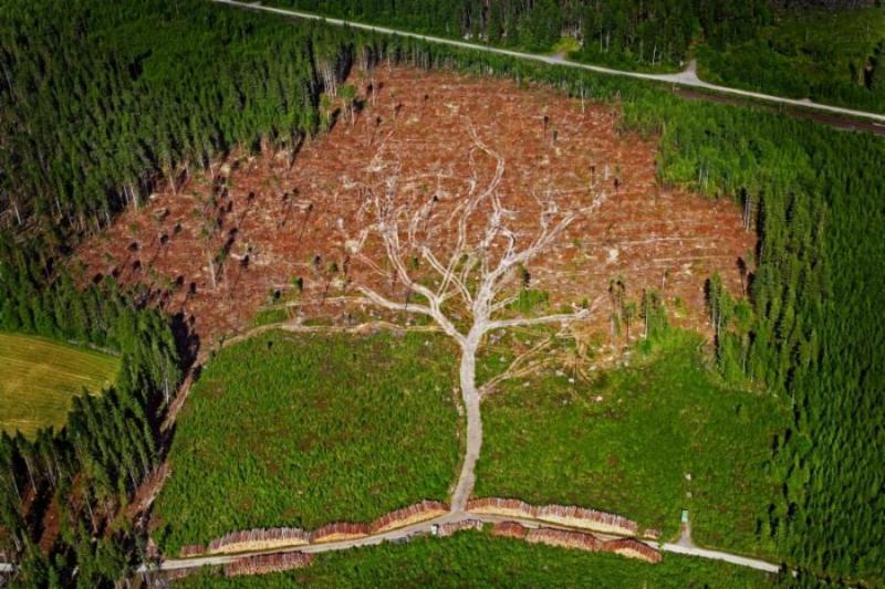 Amazing tree image