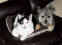 Dog and Cat Snuggle on Couch