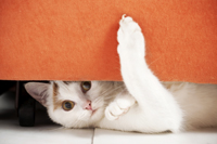 Kitty under couch