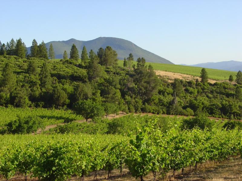 Cougar's Leap Vineyard, Red Hills - Lake County AVA