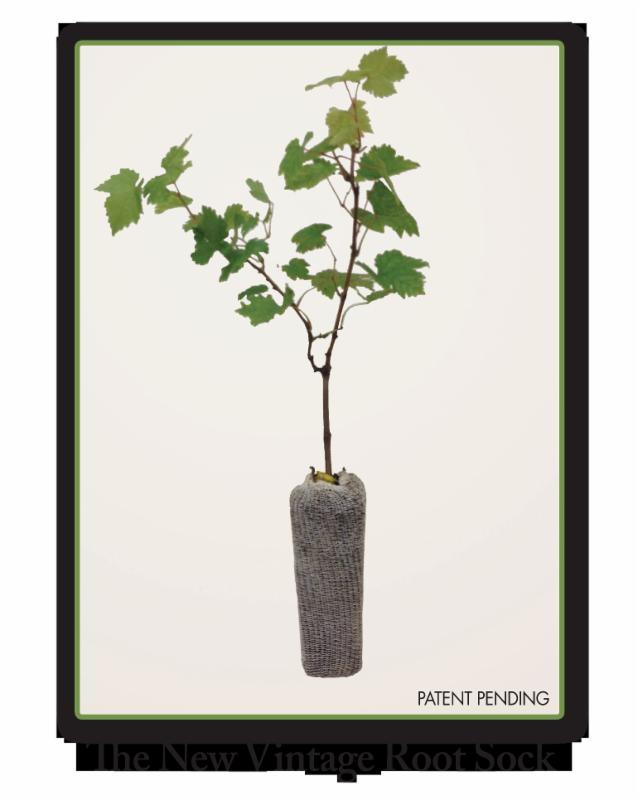 Vintage Nurseries Root Sock