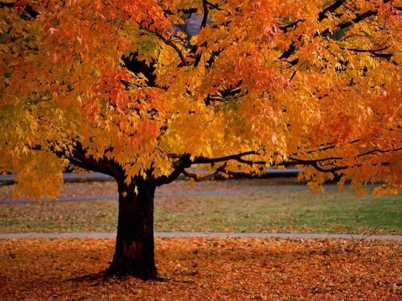 Fall Color in Nature