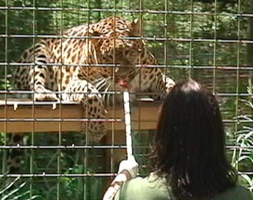 Simba big cat rescue