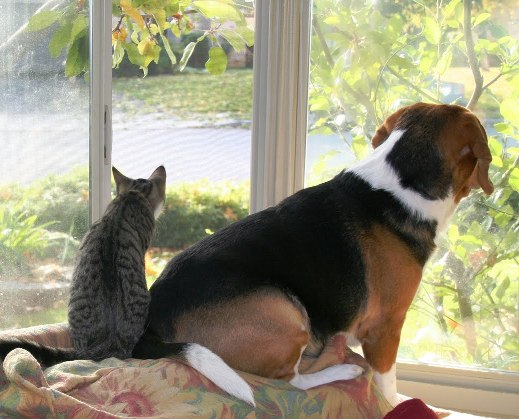 Dog and Cat in Window