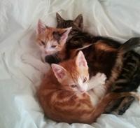 Glee Kittens