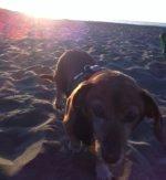 Beachy Laverne