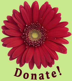 gerber daisy - donate
