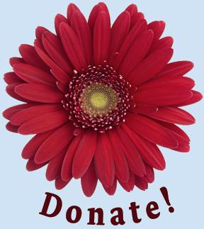 gerber daisy - donate