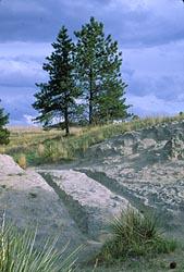 Oregon Trail wagon ruts