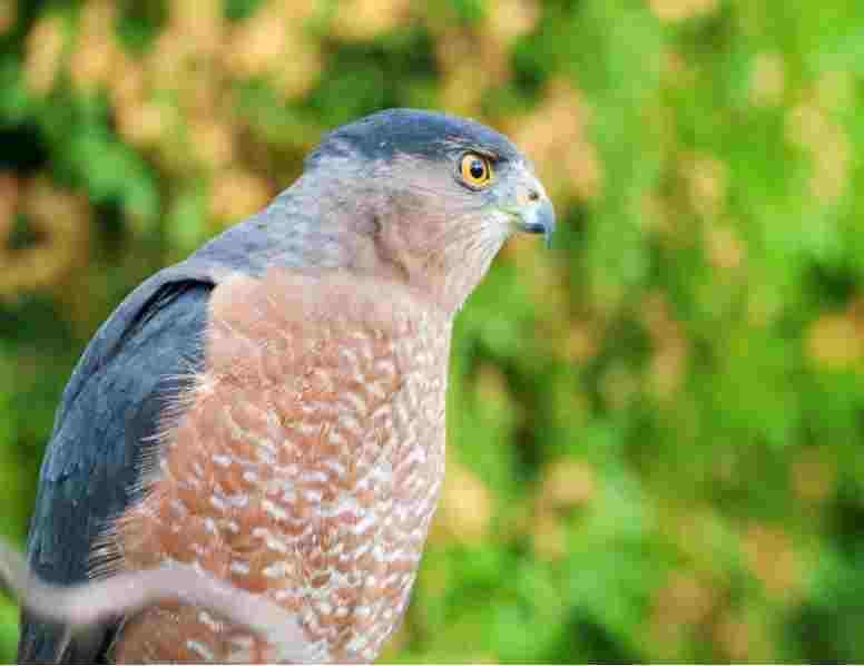 Cape May bird