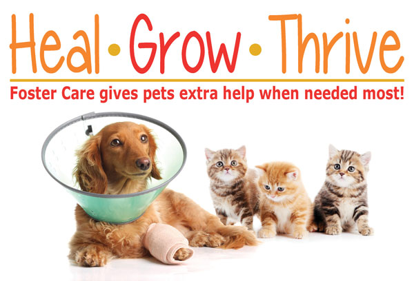 Heal, Grow, Thrive - Foster Care Program