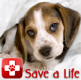 Save a Life - Pet First Aid & CPR
